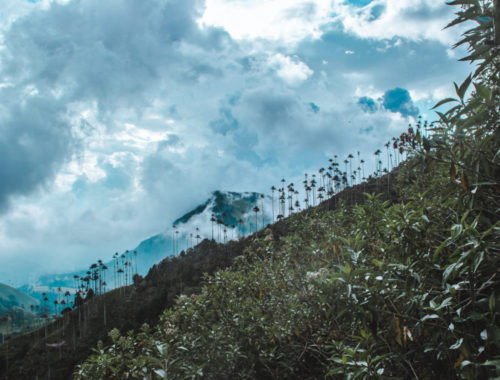 Mistake on the Cocora Valley Hike - Do not hike up the wrong mountain! | Valle de Cocora palm trees hiking routes | Salento Colo,bia travel guide by Cuppa to Copa Travels